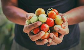 World Food Day: From Farm to Fork and the Vital Actions and Progress in between